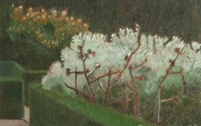 Silver Sage at Sissinghurst