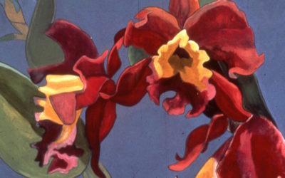 Velvety Purple Orchid
